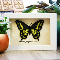 Butterfly Shadowbox_image