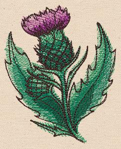 Passport to Scotland - Scottish Thistle_image