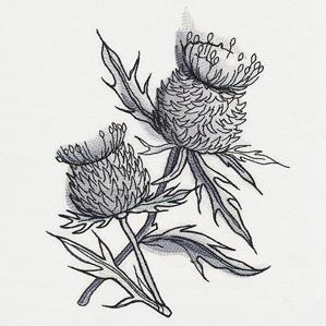 Ink & Wash - Thistle_image