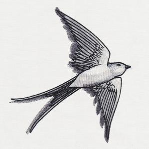 Ink & Wash - Swallow_image