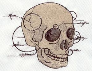 Anatomical Skull_image