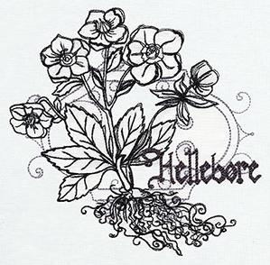 Pretty Poison - Hellebore_image