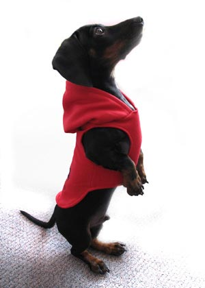 Dog Hoodie at Urban Threads