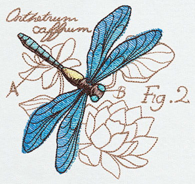 Miniature Menagerie Dragonfly Diagram Urban Threads Unique And
