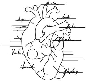 Anatomical Heart Urban Threads Unique And Awesome Embroidery Designs