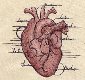 Anatomical Heart_image
