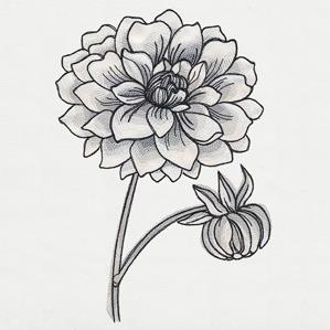 Ink & Wash - Dahlia_image