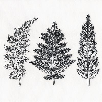 Botanical Ferns_image