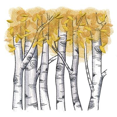 Autumn Birch Woods_image