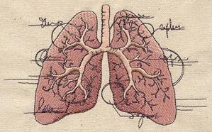 Anatomical Lungs_image