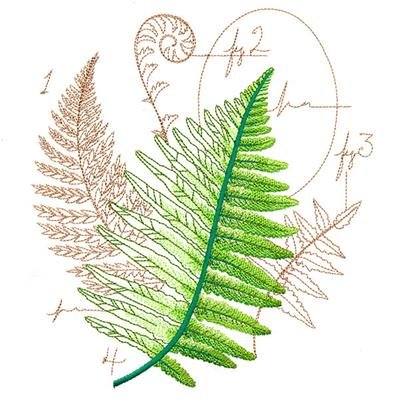 Scientific Fern Collage_image