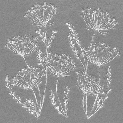 Blooming Queen Anne's Lace Square_image
