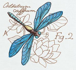 Miniature Menagerie Dragonfly Diagram_image